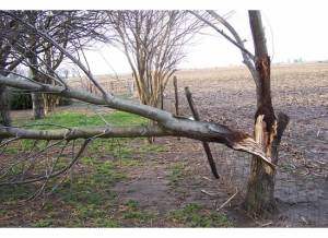 tornado damage to tree